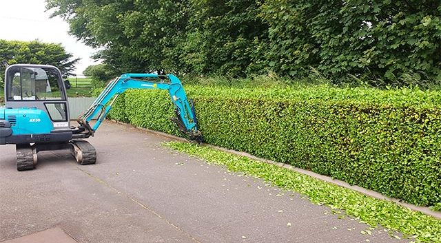Hegarty Hedge Cutting Cork city