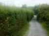 hedge-before