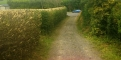 Finished Hedge Cut